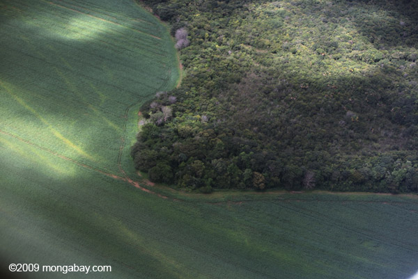 Misteri Peradaban Kuno Kuhikugu di Hutan Amazon