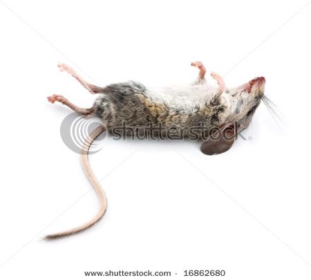 Entierros y visiones Rata+Muera
