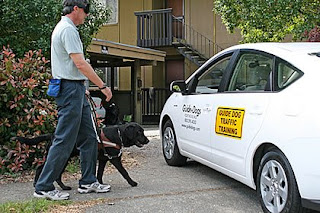 Photo of a Guide Dog instructor in a blindfold training a black Labrador Retriever with a hybrid car