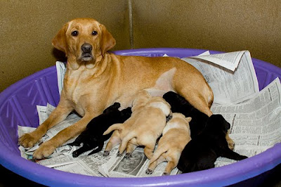 Lania with her first litter of  pups