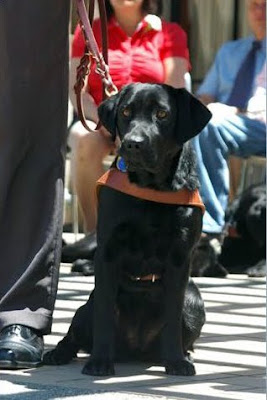 Black Lab Freya at graduation