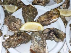 assiette d'huîtres à la dégustation