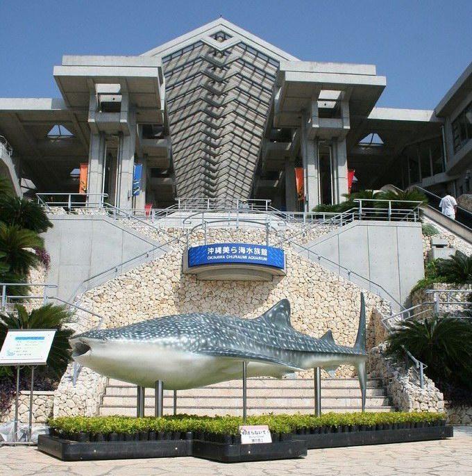 Aquarium Ikan Paus Di Jepang Okinawa_churaumi_aquarium_23