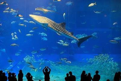 Okinawa Churaumi Aquarium In Japan Damn Cool Pictures