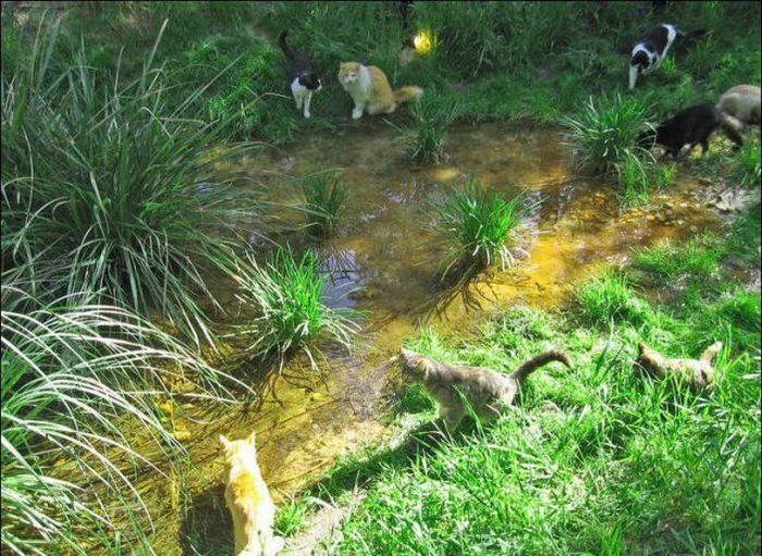 http://4.bp.blogspot.com/_mmBw3uzPnJI/S-RKoe4oTWI/AAAAAAABOzY/FDj09pKuqkE/s1600/homeless_cats_31.jpg