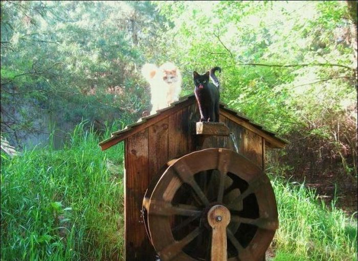 http://4.bp.blogspot.com/_mmBw3uzPnJI/S-RKwcuQFKI/AAAAAAABOzw/mVK4mP0p_gY/s1600/homeless_cats_28.jpg