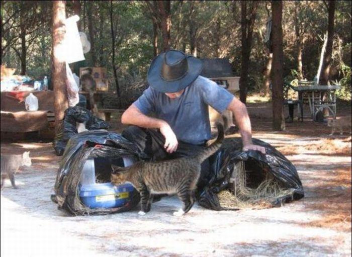 http://4.bp.blogspot.com/_mmBw3uzPnJI/S-RLfmTzmwI/AAAAAAABO2A/-El4RJvbnl4/s1600/homeless_cats_10.jpg