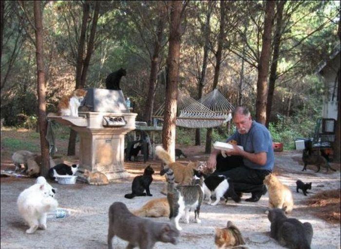 http://4.bp.blogspot.com/_mmBw3uzPnJI/S-RLgJS1HnI/AAAAAAABO2Q/GJTms3pKdqM/s1600/homeless_cats_08.jpg