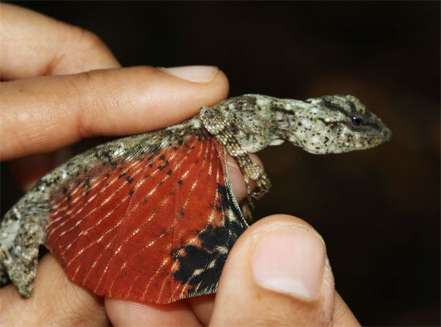 tiny_dragon_lizard_from_avatar_04.jpg