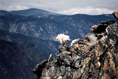 Hewan Pendaki Gunung [ www.BlogApaAja.com ]