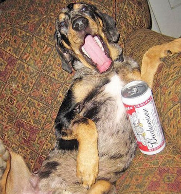 Dogs with Beer Seen On www.coolpicturegallery.net