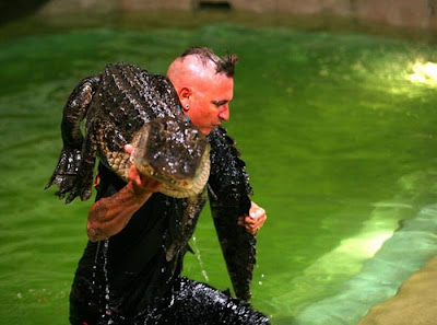Freestyle Alligator Wrestling In Florida Seen On www.coolpicturegallery.net