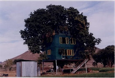 Mango Tree House Seen On www.coolpicturegallery.net