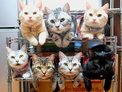 Way to Store and Organize Your Cats Seen On www.coolpicturegallery.net