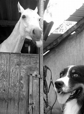 Photobombs By Horses Seen On www.coolpicturegallery.net