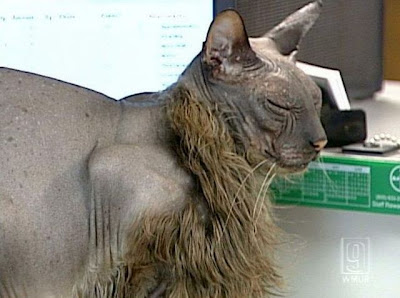 Hampshire Tourism on The Ugliest Cat In The World   Monstrous Animals