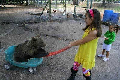 Kebun Binatang Paling Berbahaya di Dunia - Lujan Zoo24