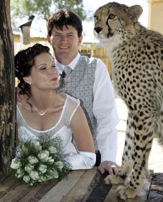 http://4.bp.blogspot.com/_mmBw3uzPnJI/SkoHOZ2SyjI/AAAAAAAApXw/AFnfrlv0RkY/s400/living-with-cats-06.jpg