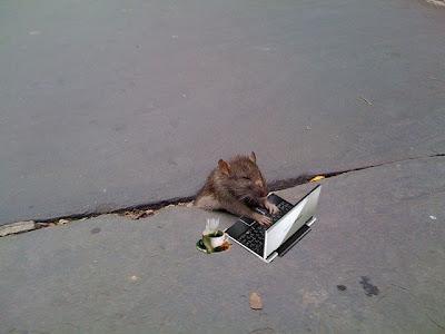 http://4.bp.blogspot.com/_mmBw3uzPnJI/Sug0nuMP8HI/AAAAAAAA1OA/7-L0eeukuqI/s400/sad_rat_sidewalk_16.jpg
