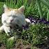 Inilah Kucing Paling Malas Di Dunia