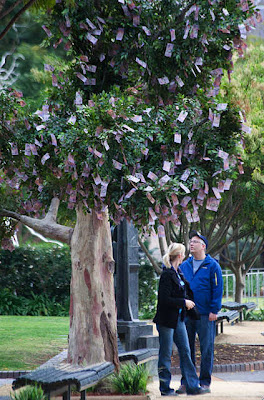 Money Grow on Trees in Australia Seen On  www.coolpicturegallery.net
