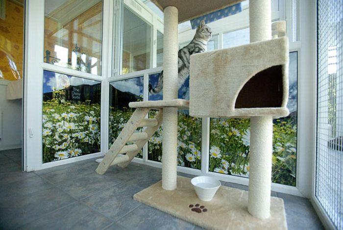 فندق خمسه نجوم للقطط luxury_cat_hotel_in_uk_06.jpg