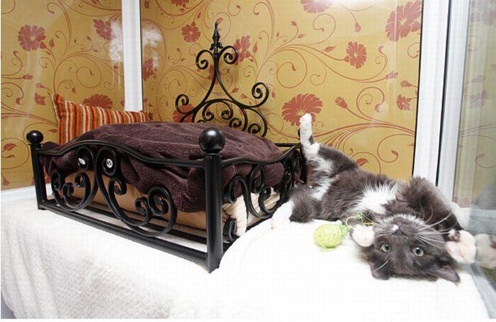 فندق خمسه نجوم للقطط luxury_cat_hotel_in_uk_02.jpg