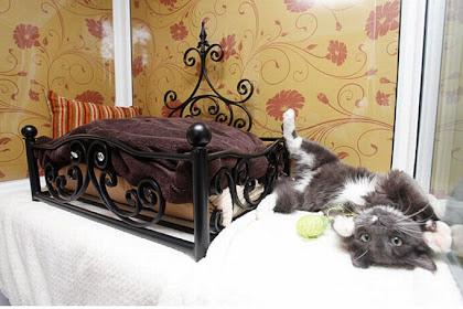 Luxury Pet Hotel Uk