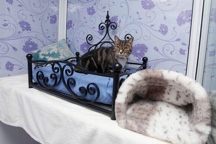 فندق خمسه نجوم للقطط luxury_cat_hotel_in_uk_01.jpg