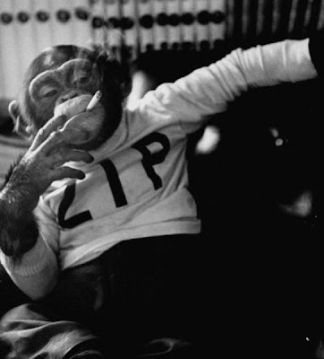 Smoking Monkey Seen On www.coolpicturegallery.us