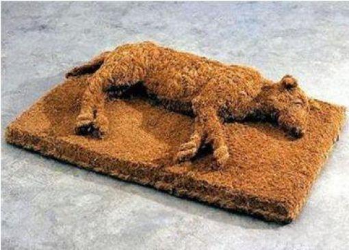 Best Dog Door Mat