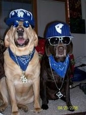 Gangsta Dog Seen On www.coolpicturegallery.us