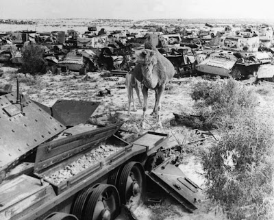 Animals in War Seen On www.coolpicturegallery.us
