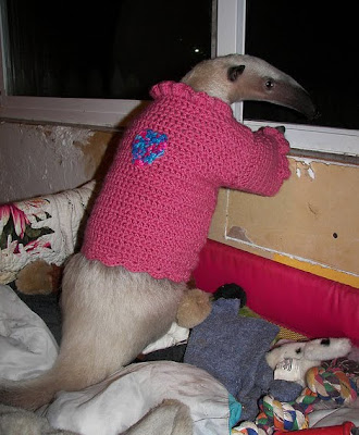 Pet Anteater Seen On www.coolpicturegallery.us