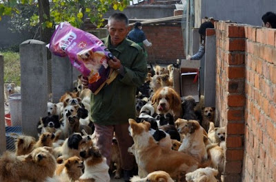 Chinese Woman Adopts 1500 Dogs, 200 Cats Seen On  www.coolpicturegallery.us