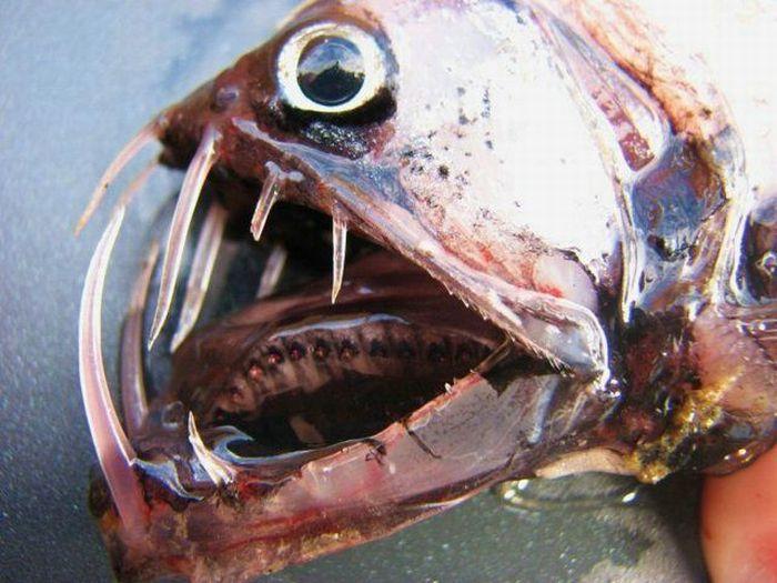 http://4.bp.blogspot.com/_mmBw3uzPnJI/TRBkSdfQ0FI/AAAAAAAB1aw/T1HLW4d3qew/s1600/ugliest_and_scariest_fishes_12.jpg