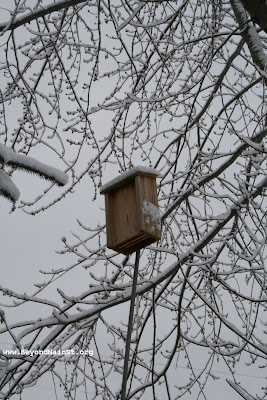 bat house in december