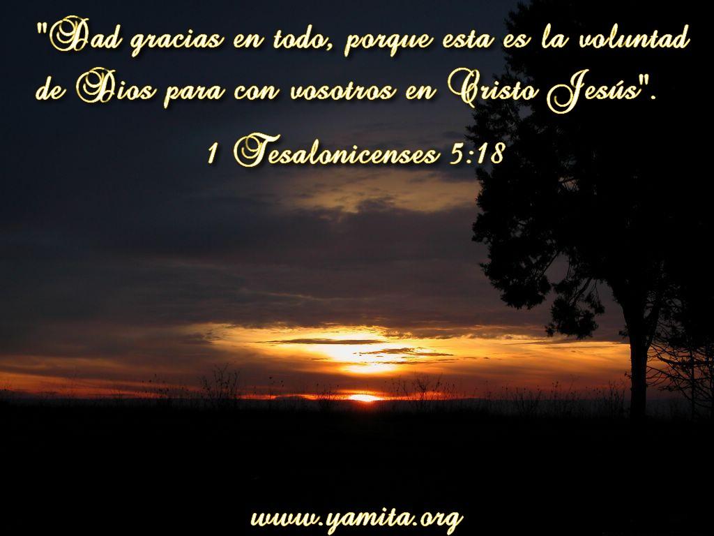 Porque Esta Es La Voluntad De Dios Para Con Vosotros En Cristo Jes  S