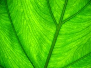 greenleaf summary