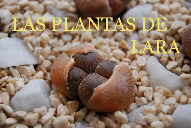 LAS PLANTAS DE LARA