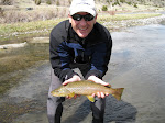 Lower Madison Brown Trout, Montana