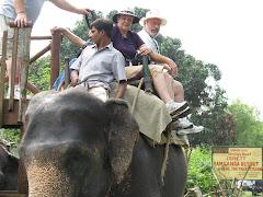 """elephant """"joy ride"""""""