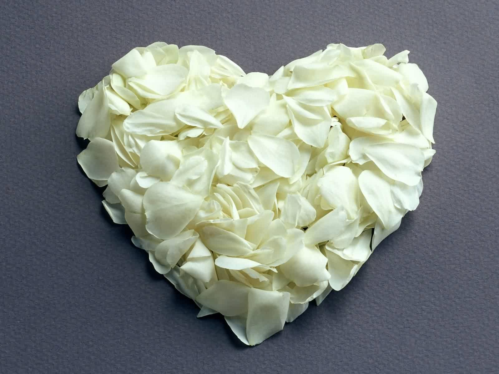 White Roses Tumblr