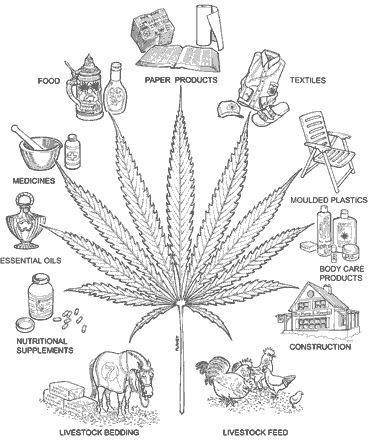 Many Advantages Of Cannabis