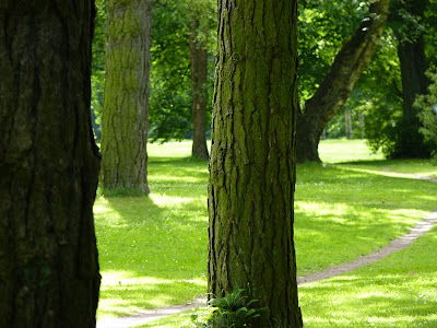 Hamburger Stadtpark, Hamburg, Bäume, Baum