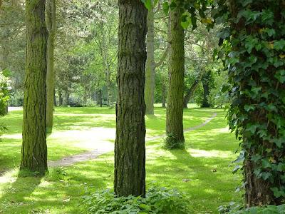 Stadtpark Hamburg Baeume