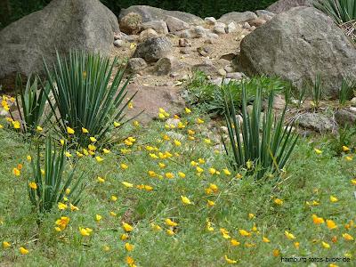 ungewöhnliche Vegetation im Botanischen Garten, Hamburg, Klein Flottbek