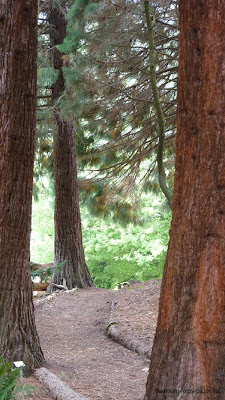 Neuer Botanischer Garten, Wanderweg in Hamburg, Bäume