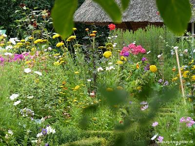 Blumen und Schilfdach, Botanischer Garten, Hamburg, Klein Flottbek