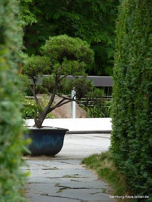 Weg durch die Hecke zum japanischen Garten, Hamburg